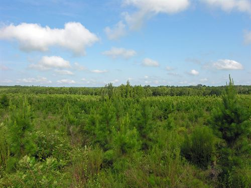 1157.11 Acres Planted Pines : Preston : Webster County : Georgia