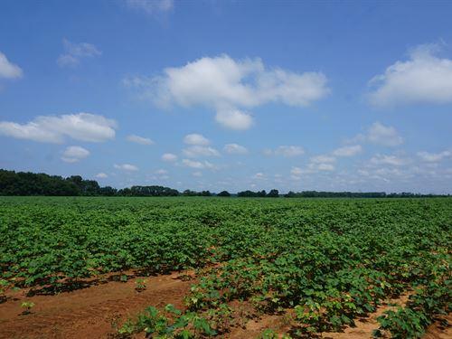 Young Mills Rd. Farm : Americus : Sumter County : Georgia