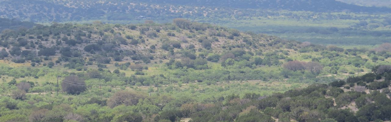 Free Ranging Exotics : Rocksprings : Edwards County : Texas