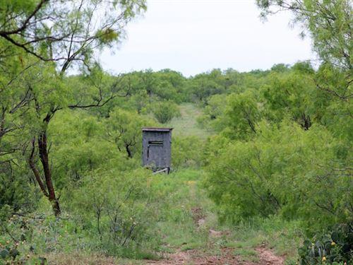 Brazos Valley Ranch : Throckmorton : Texas