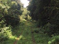 130 Acres River Road North : Summit : Pike County : Mississippi