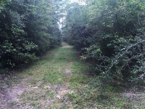 38 Acre Hunting Tract, Walthall Cou : Sandy Hook : Walthall County : Mississippi