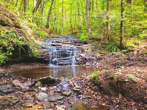 Pastures, Creeks & 141 Acre Farm : Hampshire : Lewis County : Tennessee