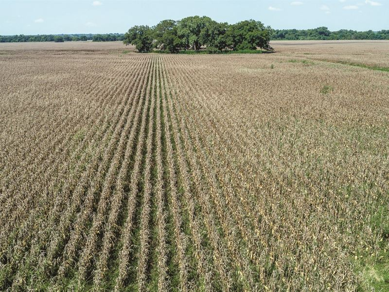 Milam & Falls Cty Farmland Auction : Buckholts : Milam County : Texas