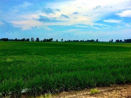Black River Row Crop Farm : Reyno : Clay County : Arkansas