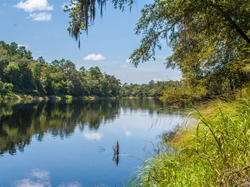 Reduced River Front Hunting Timber : Branford : Lafayette County : Florida