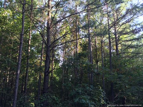 Hunting/Home Site/ Timber Tract : Noxapater : Winston County : Mississippi