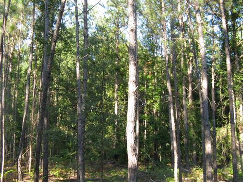 40.00 Acres - Chesterfield County : Cheraw : Chesterfield County : South Carolina