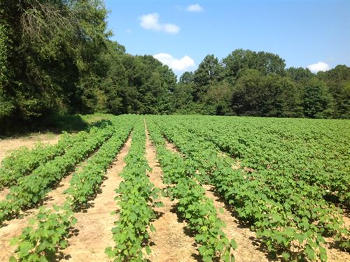Farming And Hunting Land : Selma : Dallas County : Alabama