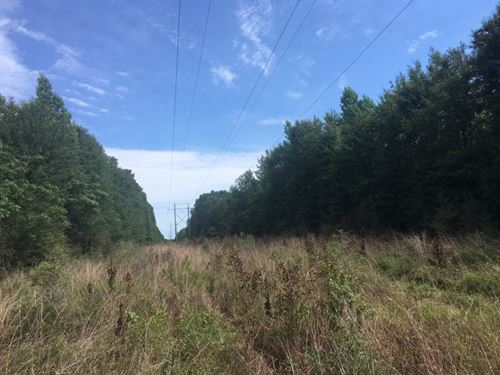 Small Hunting Tract Close To La Sta : Osyka : Pike County : Mississippi