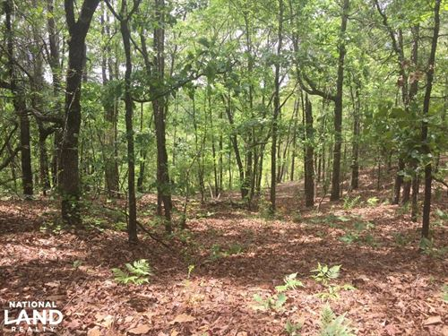 Forest Route 424 Recreational Tract : Plantersville : Chilton County : Alabama