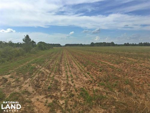 Lee Road Farm And Investment Tract : Robertsdale : Baldwin County : Alabama
