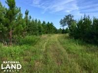 Buena Vista Hunting And Timber : Buena Vista : Marion County : Georgia