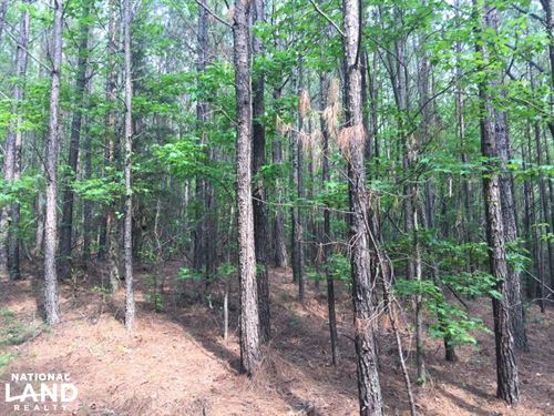 Renfrow Road Hunting Tract : Red Bay : Franklin County : Alabama