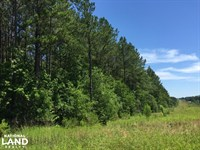 Reasonable Timber / Hunting Tract : Mount Olive : Jefferson Davis County : Mississippi