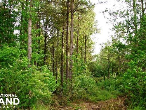 County Road 42 Hunting Camp Site : Havana : Hale County : Alabama
