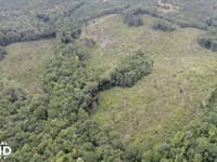 Rattlesnake Rd, Timber Investment : Moundville : Hale County : Alabama