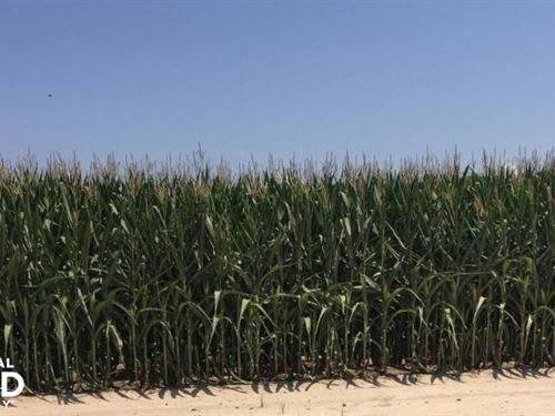 700 Acre Irrigated Level Row Cro : West Point : White County : Arkansas