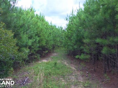 Hunting Property With Homesite : Williston : Barnwell County : South Carolina