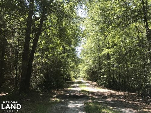 Sardis Road Recreational Homesite : Ridgeland : Jasper County : South Carolina