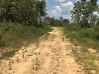 80 Acre Recreational Tract Tate : Sarah : Tate County : Mississippi