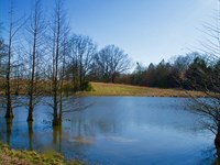Hwy 304 20 Acres, Lake, Shop And Ai : Hernando : Desoto County : Mississippi