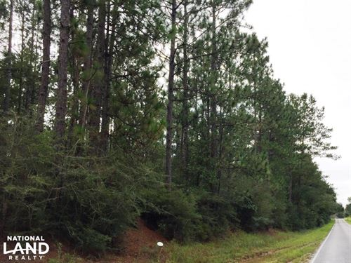 Timberland Investment Tract Near Po : Poplarville : Pearl River County : Mississippi