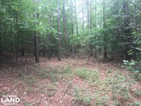 Jones Road Hunting And Timber Oppor : Tuscumbia : Colbert County : Alabama