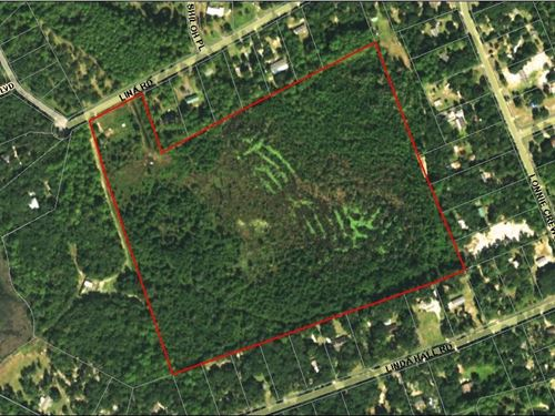 38.53 Acres- Lina Rd : Fernandina Beach : Nassau County : Florida