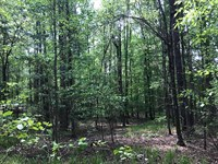 Great 30 Acre Hunting Property : Thomaston : Upson County : Georgia