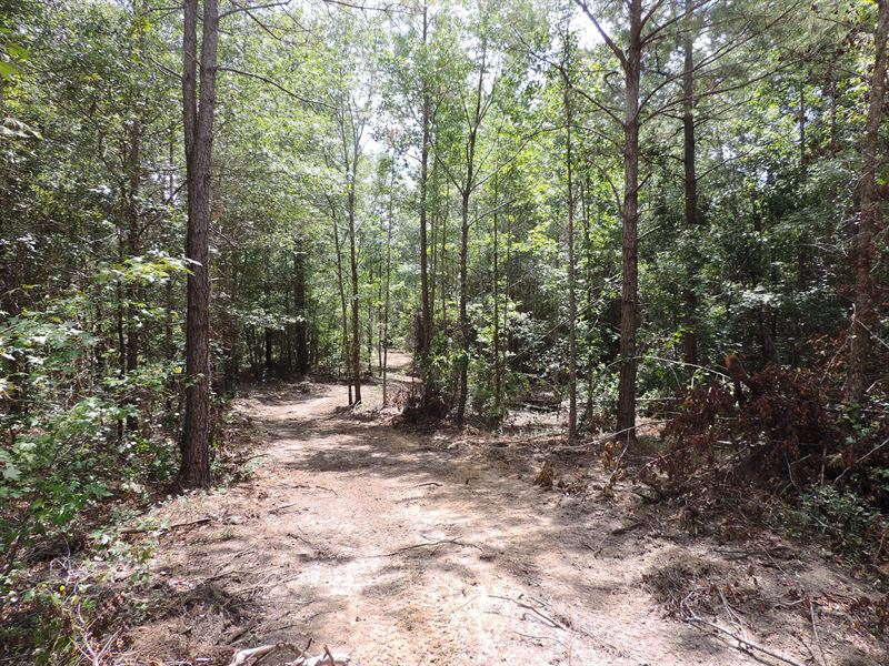 Gum Swamp Creek Tract : Cochran : Dodge County : Georgia