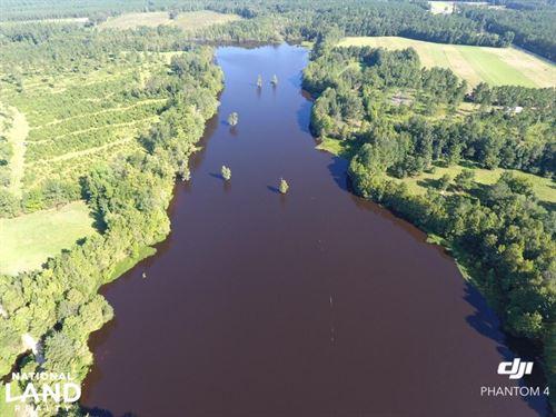 Black Mingo Plantation : Georgetown : South Carolina