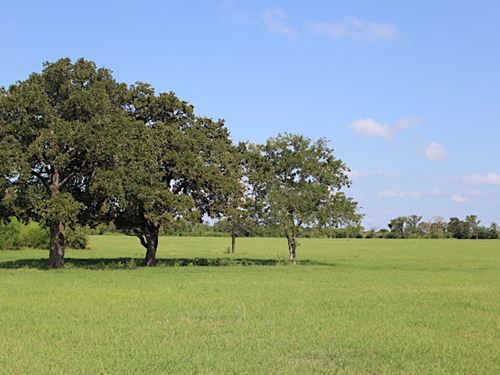 North Zulch Land Auction : North Zulch : Madison County : Texas