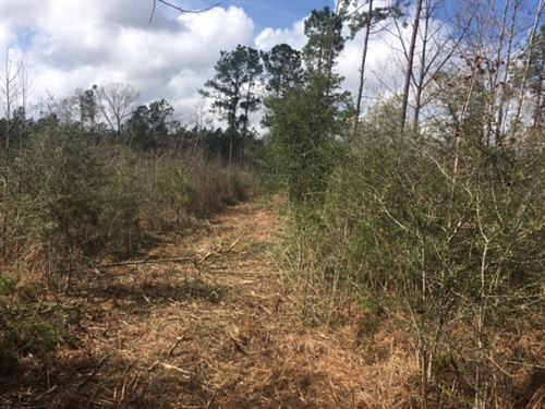 20 Acres Bertha Lane : Magnolia : Pike County : Mississippi