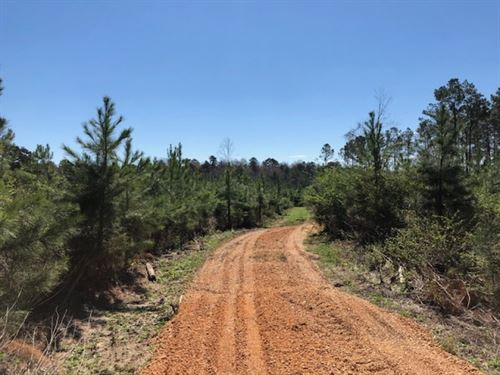 35.93 Acres Recreational And Huntin : McComb : Pike County : Mississippi