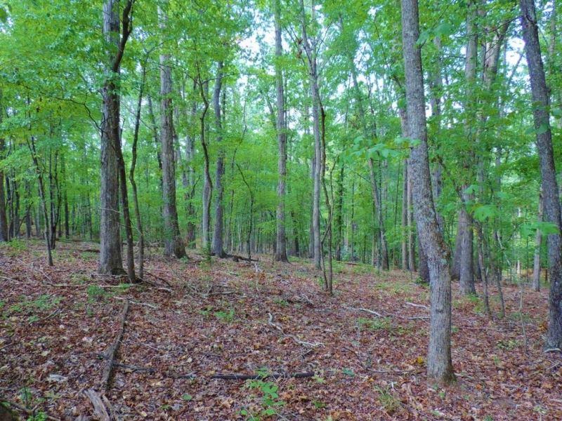 Reduced, Hardwood, Cabin & Cre : Tignall : Wilkes County : Georgia