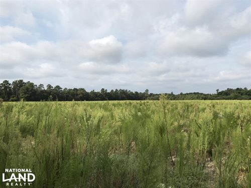 Roseboro Hunting Farm Land : Roseboro : Sampson County : North Carolina