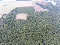 133+/- Acres - Tallapoosa Co, Al : Notasulga : Tallapoosa County : Alabama