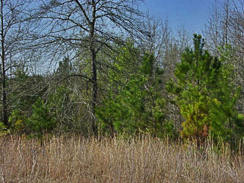 Wooded, Private Acreage With Trees : Chesterfield : Chesterfield County : South Carolina