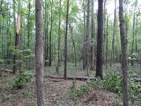 Gordon Hunting Tract : Gordon : Wilkinson County : Georgia
