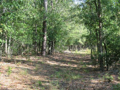 Garland Road Tract : Orangeburg : South Carolina