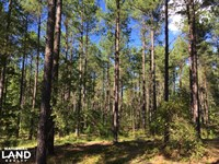 Recreational Timber Investment : Tignall : Wilkes County : Georgia