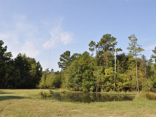 208.76 Ac County Road 3706A : Splendora : Liberty County : Texas