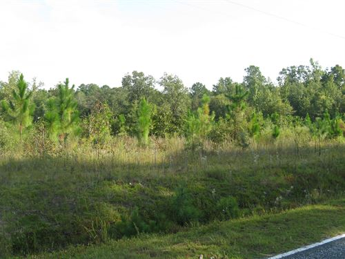 29.4 Acres - Wallace, Sc : Wallace : Marlboro County : South Carolina
