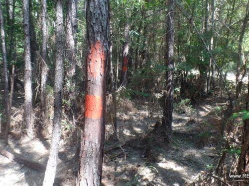 32 Ac, Timberland & Hunting Tr : Jasper : Texas