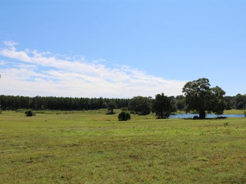 44 Acres In Smith County : Taylorsville : Smith County : Mississippi