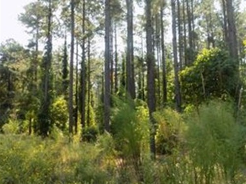 Carolina Timber Land With Creek : Chesterfield : South Carolina