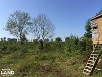 Old Camden Road Acreage With Home : McBee : Darlington County : South Carolina