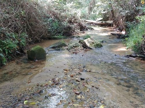 152 Acres Pittsylvania County Va : Callands : Pittsylvania County : Virginia