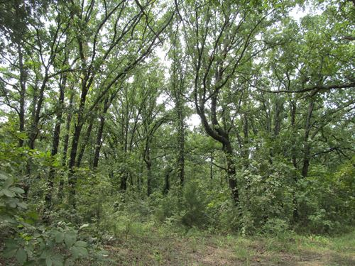 Excellent Hunting, Wooded 100 Acres : Tushka : Johnston County : Oklahoma